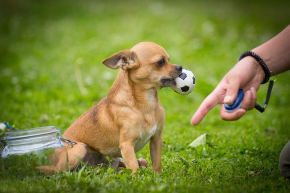Перевоспитать собаку — можно, но сложно