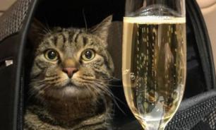 В Шереметьеве мужчину не пустили в самолет из-за толстого кота Виктора