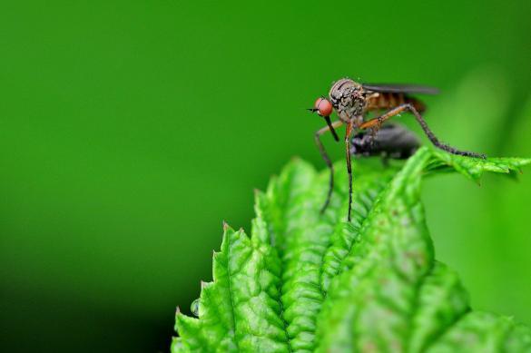 Создано новое эффективное средство от комаров