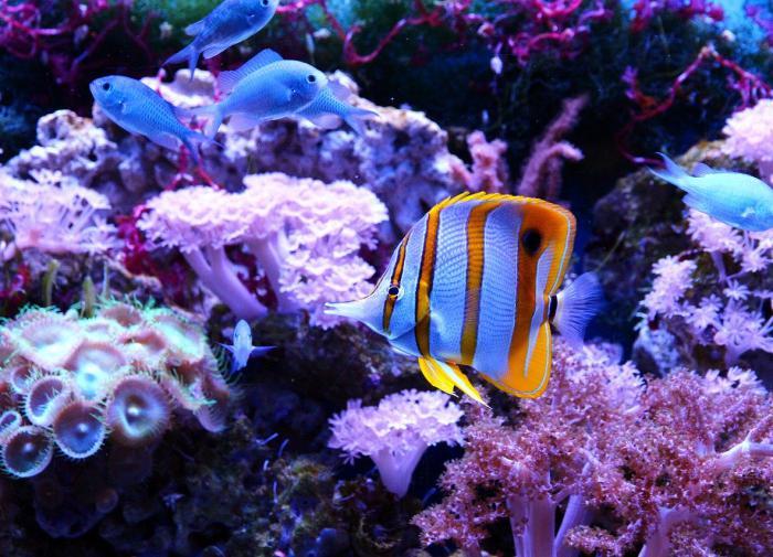 Миллионы лет назад древние позвоночные умели ходить под водой