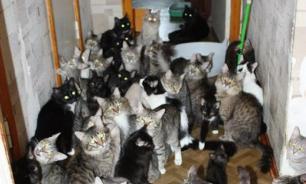 В московской квартире обнаружили 130 кошек