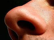 Шизофрения рождается... в носу?
