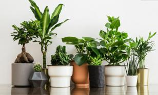 Необычные комнатные растения, которые вас удивят