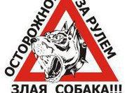 """Дорожные войны: без """"мигалки"""" только в танке!"""