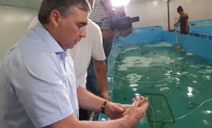 В Крыму открыли инкубатор по производству креветок