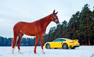Автомобиль лошади не враг, а партнер