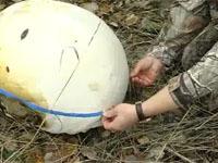 Гриб весом 12 килограммов вырос в пермском лесу.