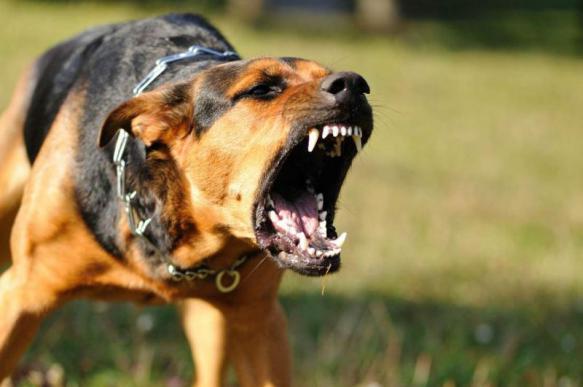 В МЧС дали советы по отпугиванию агрессивных собак