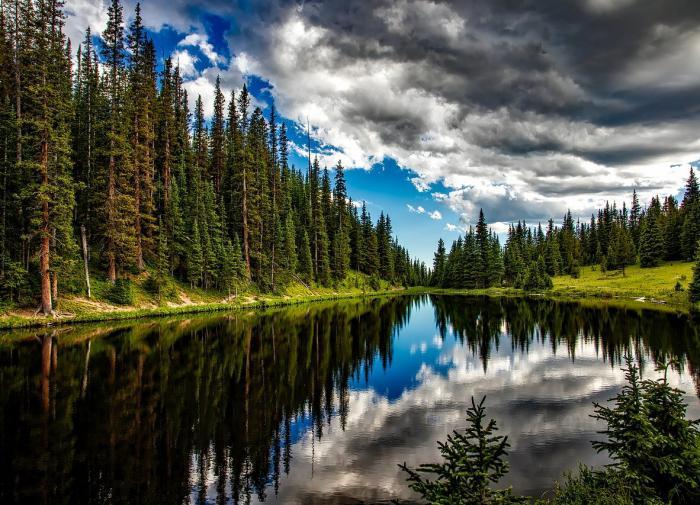 Елена Шаройкина призывает власти к восстановлению хвойных лесов