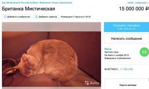 Житель Ростова продает кошку, которая лечит от похмелья, за 15 млн руб.