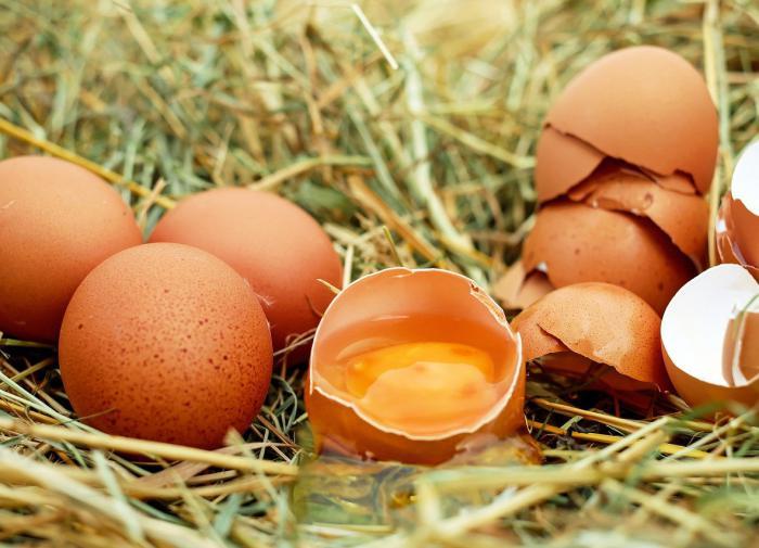 В России создали костные имплантаты из яичной скорлупы