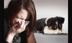 Топ-5 гипоаллергенных пород собак