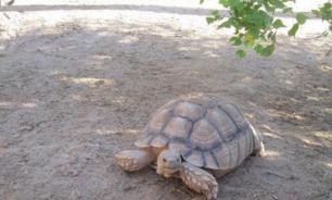 В США гигантская черепаха устроила пожар в двух домах