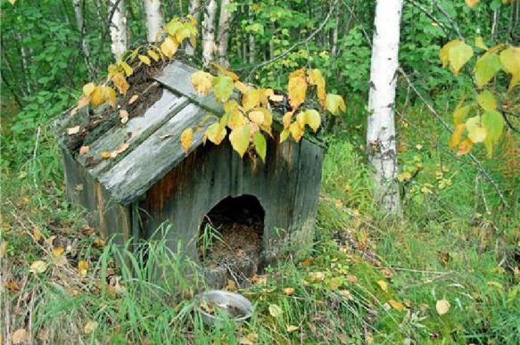 У россиянина украли более одного миллиона рублей из собачьей будки