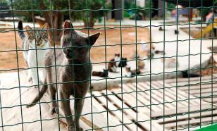 Приют для кошек: истории несчастья со счастливым концом