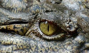 На берегу Уэльса нашли загадочное существо, похожее на крокодила