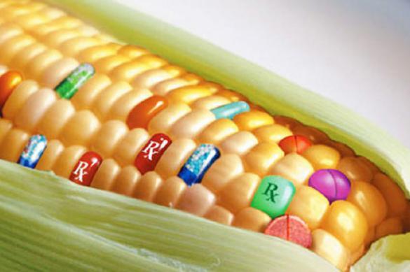 ГМО — глобальное генетическое загрязнение?