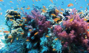 Солнцезащитный крем может навредить коралловым рифам