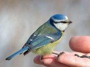 Зимние подкормки вредят птицам