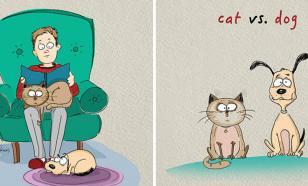Кто умнее - хозяева кошек или хозяева собак?