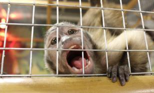 Контактные зоопарки - бизнес на животных