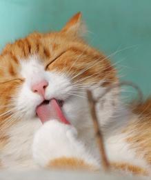 Усатый антистресс: какие недуги лечат кошки