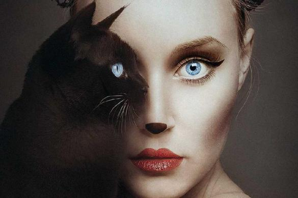 Женщины снова выбрали кошек