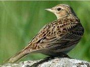 Перелетные птицы посрамили физиков