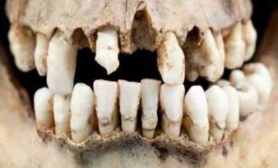 Палеонтологи обнаружили зубы млекопитающего возрастом 74 млн лет