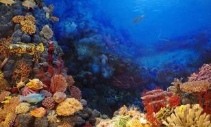 За 25 лет Барьерный риф в Австралии потерял половину кораллов