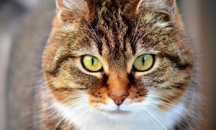 """Зоологи назвали причины """"независимости"""" домашних кошек"""
