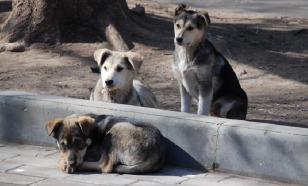 ВС разрешил не возвращать бродячих кошек-собак в места отлова
