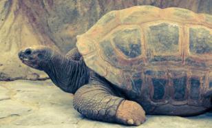 В Южной Америке нашли останки черепахи размером с автомобиль