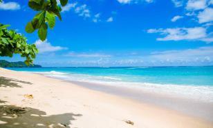 На итальянских пляжах расплодились водоросли-убийцы