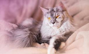 В Москве грумер при стрижке сломал кошке лапы