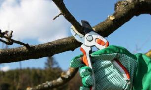 Что нужно знать про обрезку деревьев и кустарников
