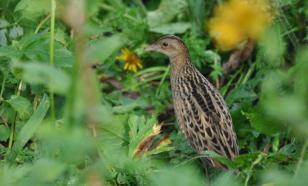 В горах Сочи изучат уникальный мир птиц