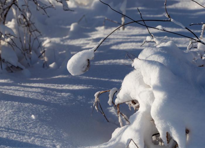 Зима в России продлится еще долго