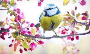 Просмотр телевизора помог птицам научиться выбирать свежую пищу