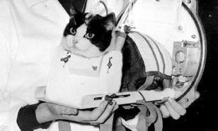 Фелисетт - первая кошка-космонавт