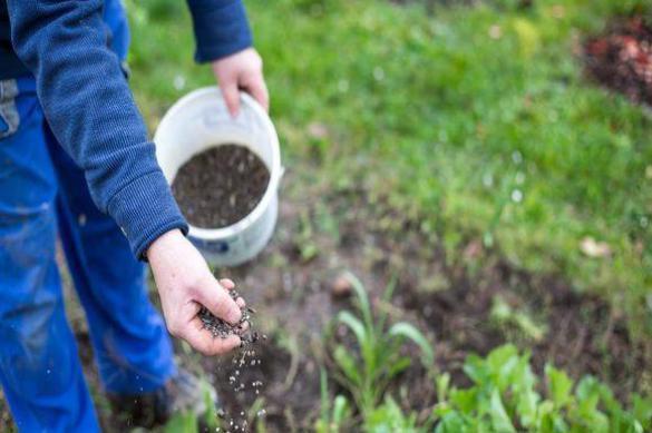 Удобрение под ногами — все отходы в дело