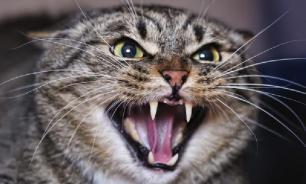 Кот задушил ребенка на Украине