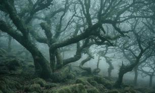 В США найдены деревья возрастом 386 млн лет