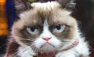 20 лет тюрьмы за убийство… кота