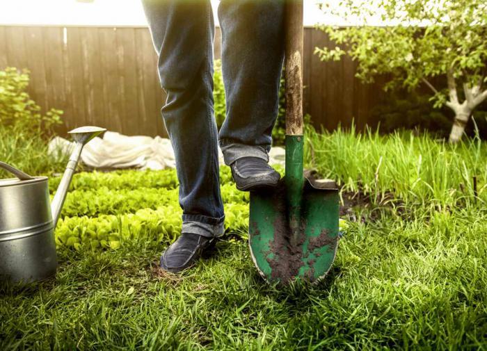 Как выбрать лопату для огорода и сада