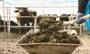 Чем подкормить деревья и кустарники