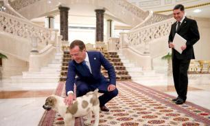 Медведев получил в подарок пятнистого алабая от президента Туркмении