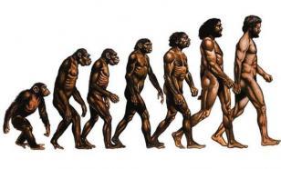 Человек продолжает интенсивно эволюционировать - исследование
