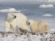 Китай подвинул Россию в Арктике