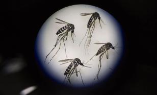 России расслабляться не стоит: в страну может вернуться малярия